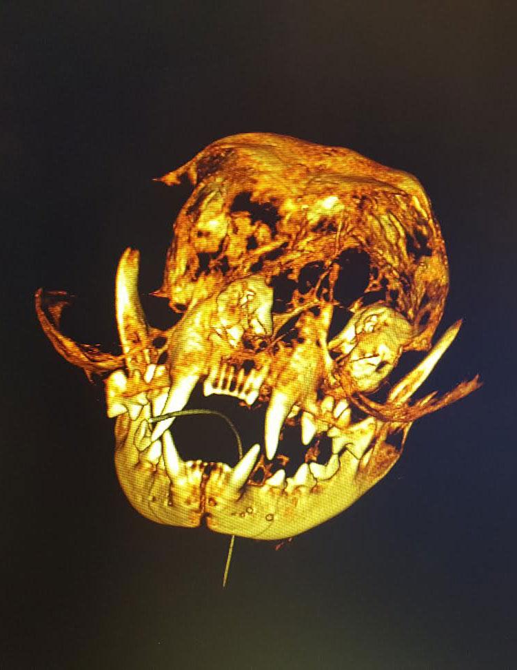 Skull Report